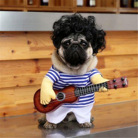 Собака в костюме моряка с гитарой