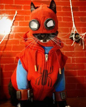 коты в костюмах супергероев фото