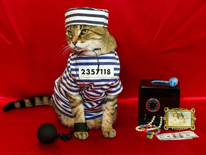 Фото арестованного кота