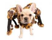 собака в костюме