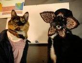 cat in costum