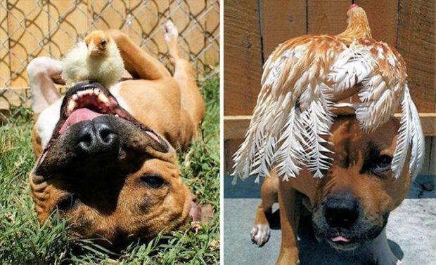 необычная дружба животных фото