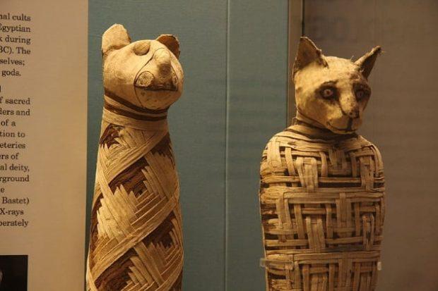 Мумии кошек