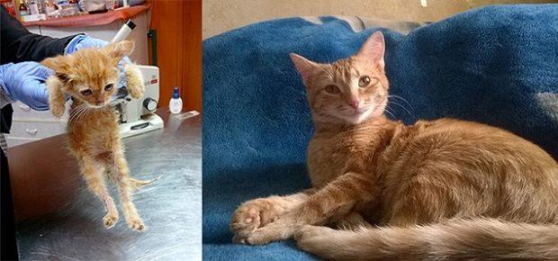 Кошка Шуша из приюта