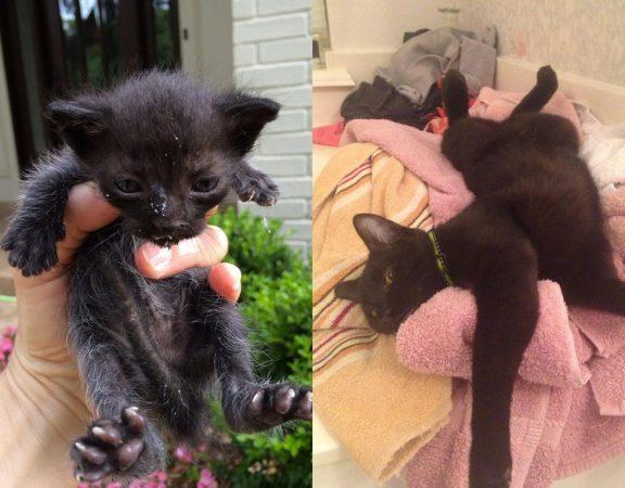 Кошка Луи