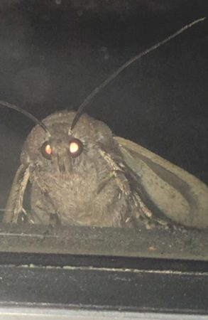 Ночной мотылёк