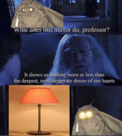 Мем с мотыльком