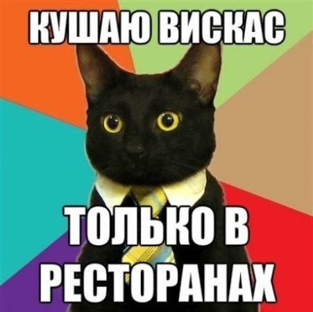 кот-интеллегент