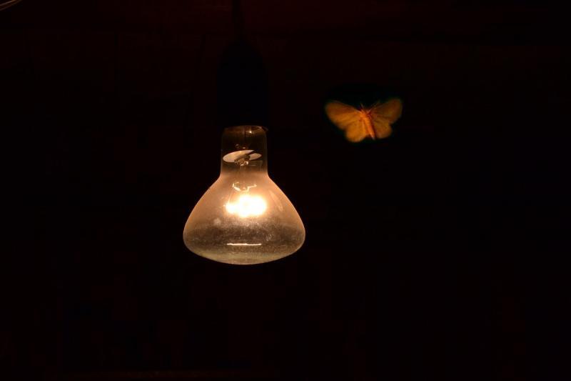 Лампа и мотылёк