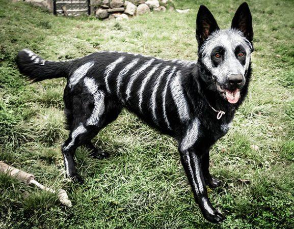 Раскрашенный под скелет пёс