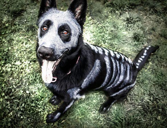 Пёс, раскрашенный как скелет