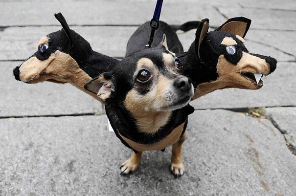 Пёсик в костюме Цербера