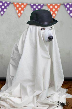 Собака в костюме привидения в шляпе