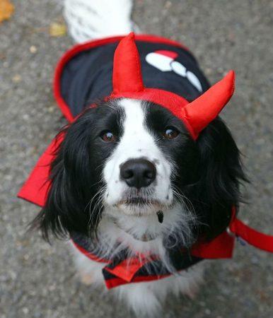 Пёс в костюме дьявола