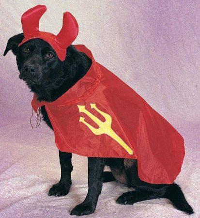 Собака в костюме дьявола