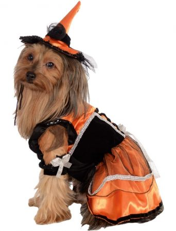 Собака в костюме для Хэллоуина