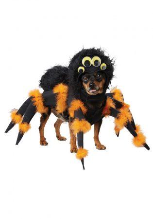 Собака в костюме паука