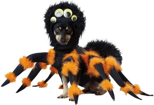 Пёс в костюме паука