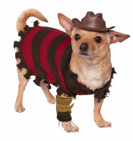 Собака в костюме Фредди Крюгера