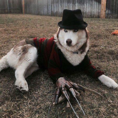 Пёс в костюме Фредди Крюгера