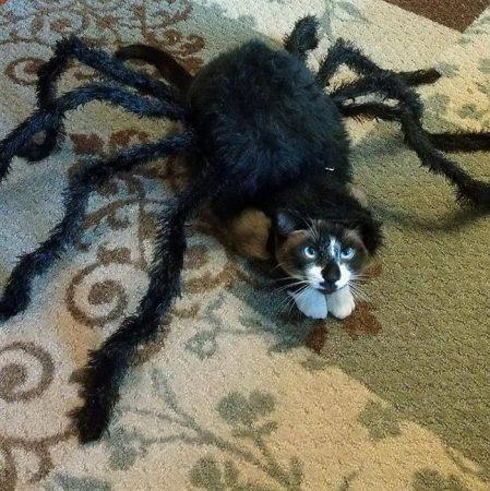 Кошка в костюме паука