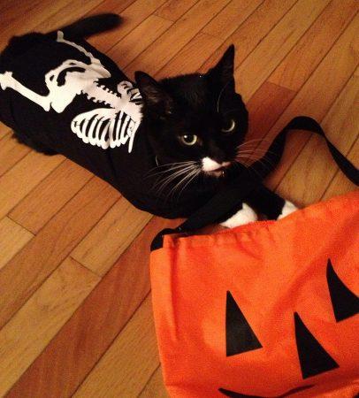 Кот в костюме скелета
