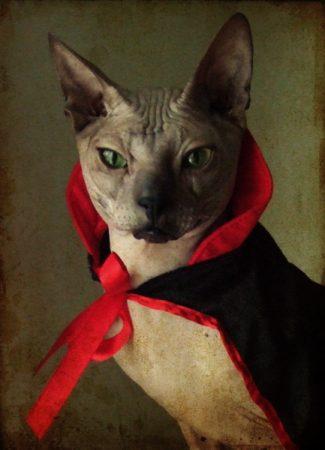 Кот в костюме графа Дракулы