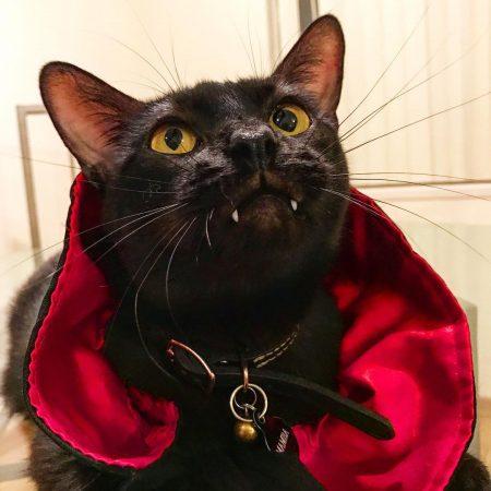 Кот в костюме вампира