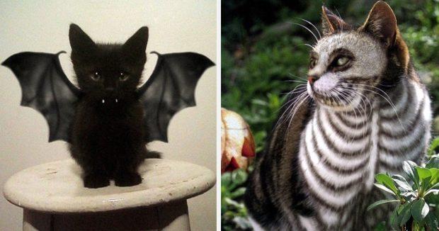 Котёнок и кот в костюмах для Хэллоуина
