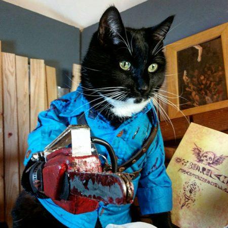 Кот в костюме героя фильма ужасов