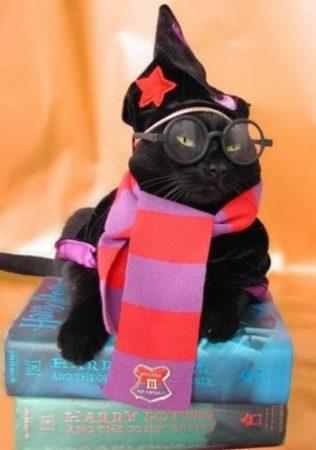 Кошка в костюме героя книги о Гарри Поттере