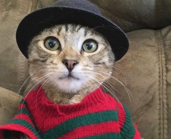Кот в костюме Фредди Крюгера