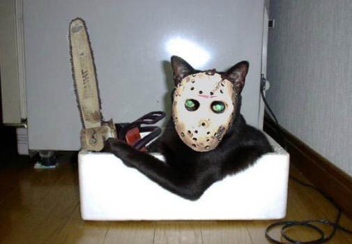 Кот в ужасном костюме с бензопилой