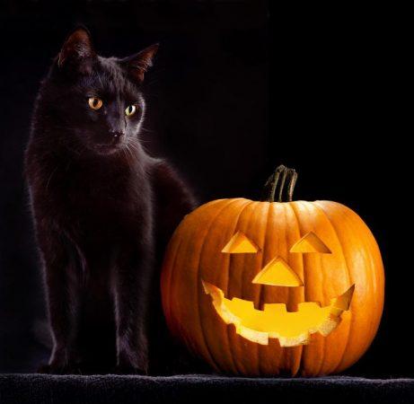Чёрная кошка и тыква