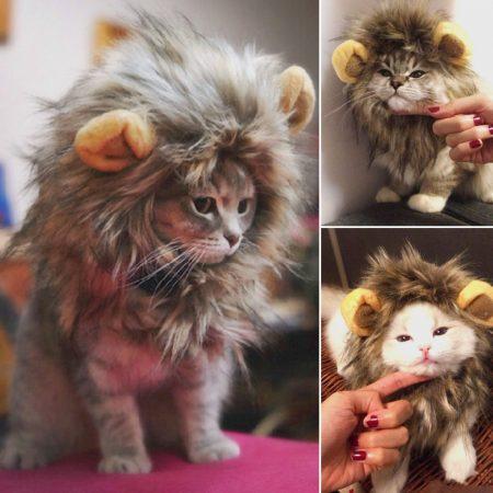 Кошка в костюме льва
