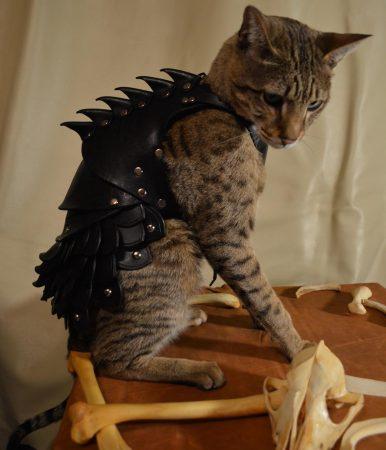 Кот в костюме для Хэллоуина