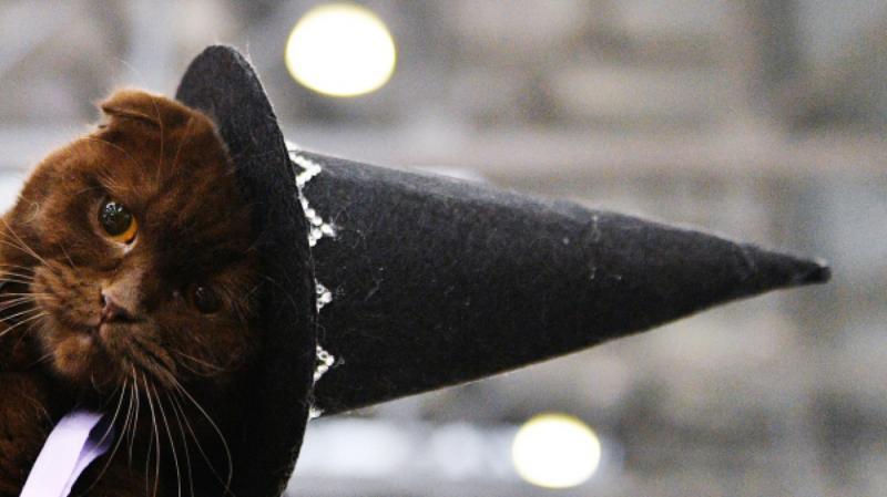 Кошка в костюме ведьмы