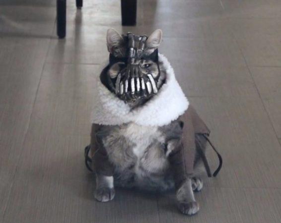 Котик в страшном костюме для Хэллоуина