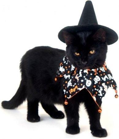 Чёрная кошка в костюме ведьмы