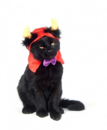 Чёрный кот в костюме дьявола