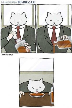 бизнес кот