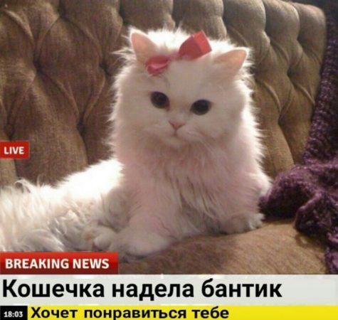 мемы про котиков