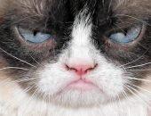 Эмоциональный кот