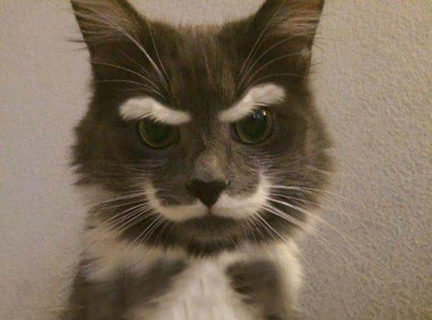 Кот с бровями и усами
