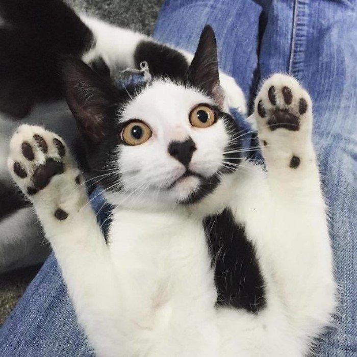 картинки самых необычных кошек все решать