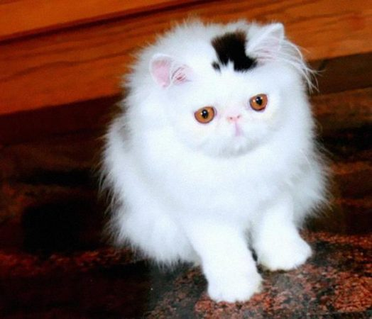 Кот со шляпой