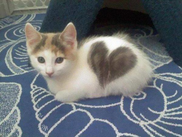 Кот с сердцем