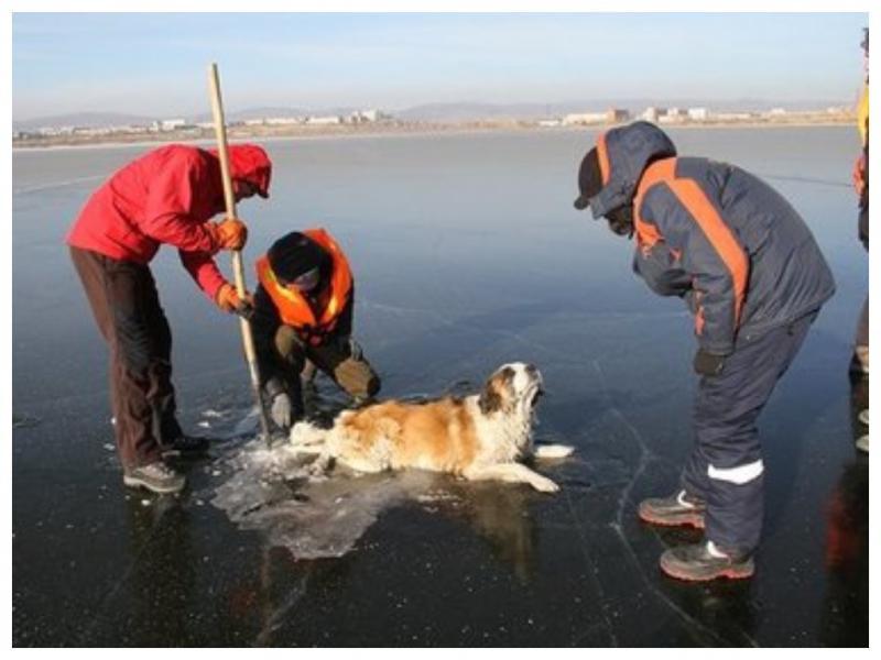вмерзшая собака