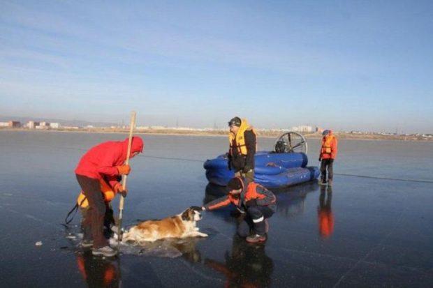 Вмерзшая в лед собаку