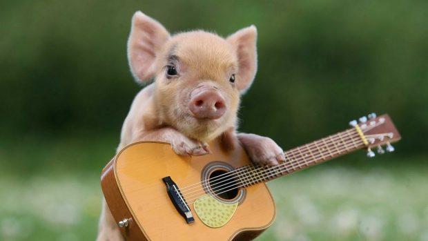 Фото свиньи с гитарой